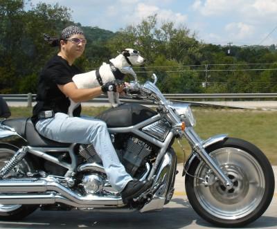 biker_dog.jpg