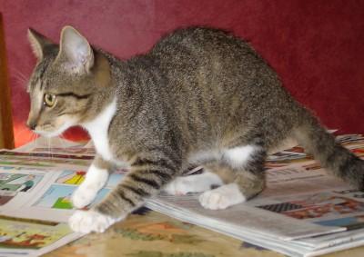 found_cat.jpg
