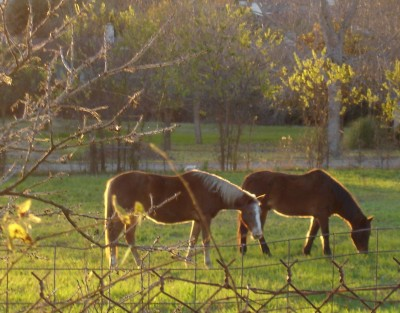 sunset_horses.jpg